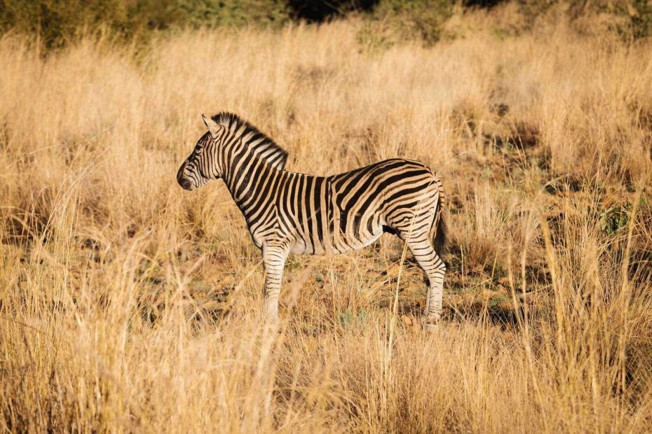 Noosa Photographer, on Safari in South Africa
