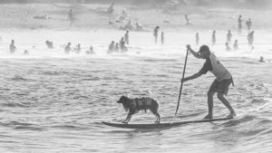 Noosa Surf Festival, Dogs - Henry Glover Sports Photographer © 2020